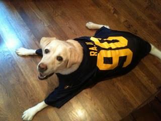 dog wearing retro football jersey