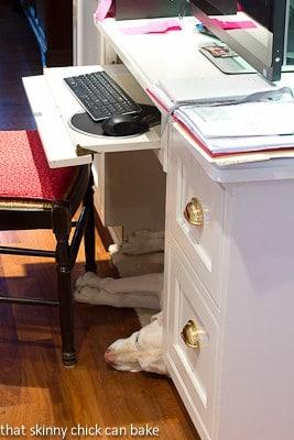 My computer desk with dog beneath